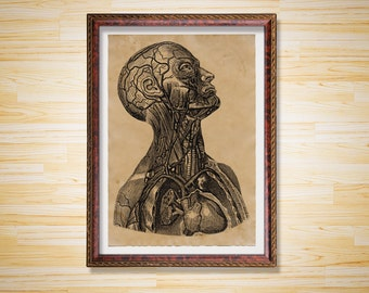 Anatomy print Human Body poster Medical decor