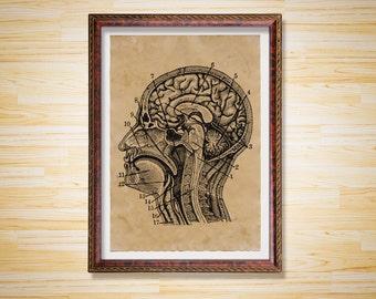 Human Head print Rustic decor Anatomy poster
