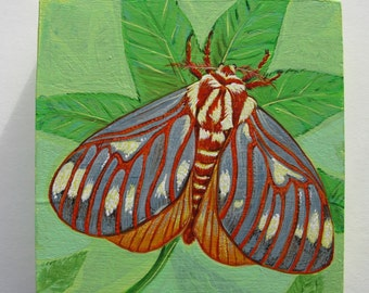 Regal Moth (Royal Hickory Moth)