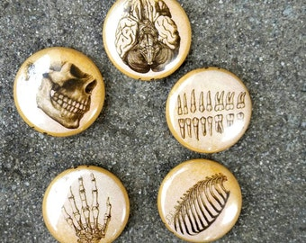 Anatomy 1 inch pin set