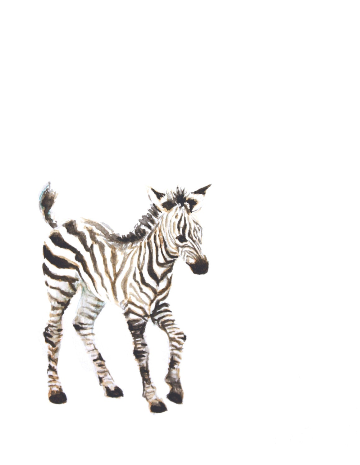 Baby Zebra Watercolor PRINT Animal Painting by ...