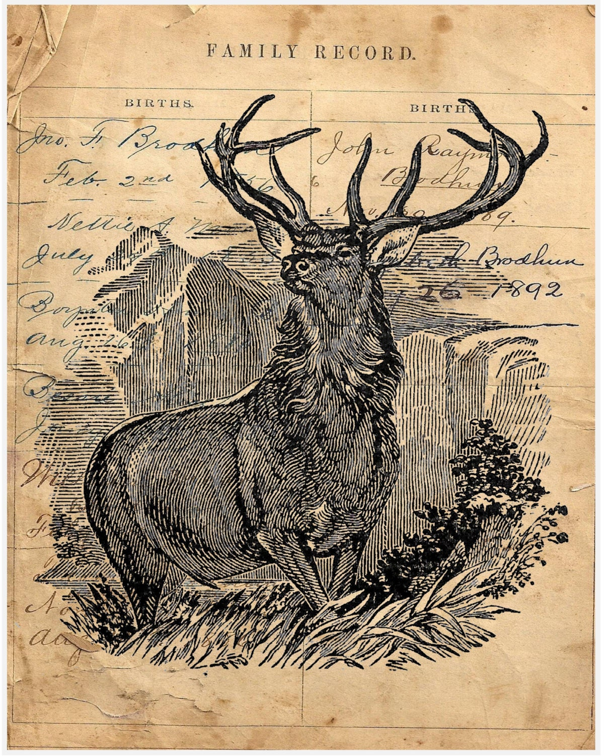 Ledger Art Of Elk : Buck elk deer antlers mountain big hunt sportsmen