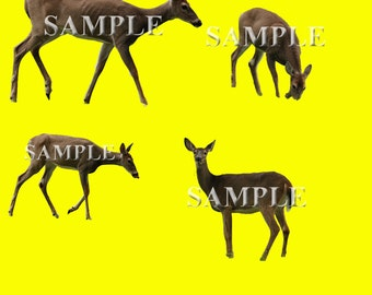 Deer Overlays PNG Files