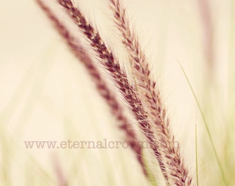 miscanthus nature foxtail print (color)