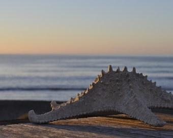 Star fish at sunset at the beach.