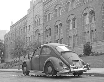 Volkswagen no. 1 - UCLA, CA  2007