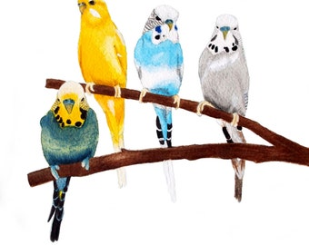 Four Budgies Print
