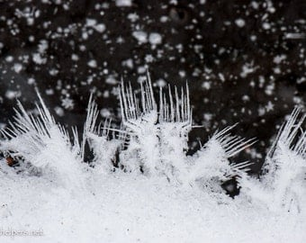 Unique Ice Crystals, Snowflakes on Frozen Creek, Winter Magic, Land of Fairies, Photograph or Greeting card