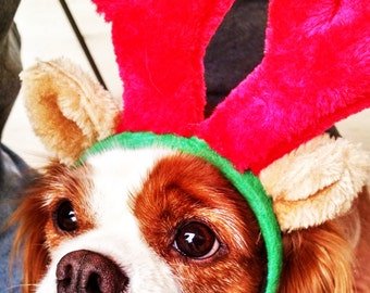 reindeer ears for dogs Christmas head wear for dogs. antler head wear for dogs