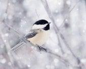 Winter Decor, Large Wall Art, Chickadee, Bird Photography, Snow, Winter Art, Large Art, Fine Art Photography, Nature Photography
