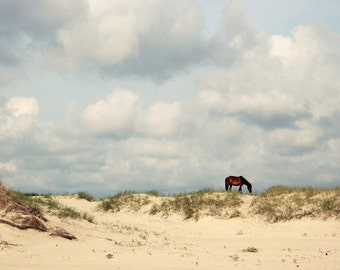 Horse on the Beach Landscape, Corolla Wild Horse Photo, Outer Banks Photo, Beach House Wall Art, Sand Dunes Photo, Gray Coastal Photograph