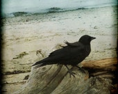 Crow Beach Blue Sand Photograph--Wind in My Feathers--Fine Art