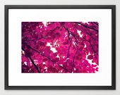 nature photography print- modern decor- magenta- hot pink- trees- leaves- home decor- wall art- home decor gift