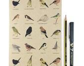 Garden Birds A5 plain notebook - wildlife / nature / birdwatching - recycled eco friendly gift