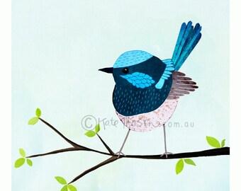 Superb Fairy Wren ART PRINT Australian Bird Series