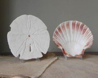 Vintage natural sand dollar and shell tan white