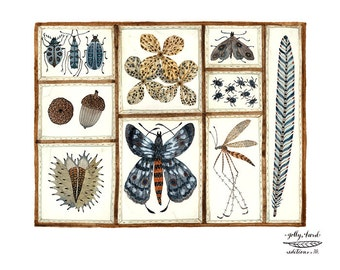 Nature Collection Print, butterflies, moths, insects, nature specimens art, giclee art print, watercolour print