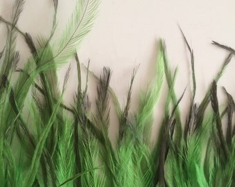 EMU  FEATHERS , Apple Green  /  683 . A