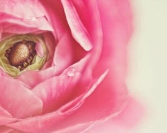 Macro Photography, Ranunculus Print, Ranunculus Photo, Pink Ranunculus, Flower Photography, Pink, Macro, Pink Flowers, Fine Art Photography