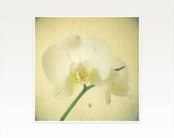 Orchid Photography, Nature Art, Cream and White Decor, Bedroom Art, Romantic Floral - White Orchid