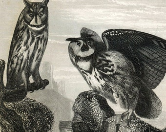 1860 Antique Steel Engraving of Owls, Kites, Vultures, Buzzards, Condor, and Other Birds. Plate 104
