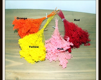 Sale:Broom Bloom-BUY 1 get 1 FREE-Gyp-Red-yellow-pink-Bleached or orange-wedding fillers-dried floral-Brooms bloom-About .6 oz bunch