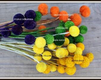 Craspedia 12 short stem Billy Balls in your choice of color Dyed Orange-Light or Dark Green-Purple and Orange-Aspen Gold