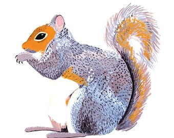 Gray Squirrel Card