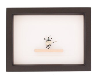 Miniature Animal Real Beetle Playing Guitar Insect Art
