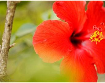 Hawaiian Fine Art Canvas wrap -Red Hibiscus -Island Flower