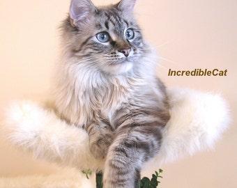 "LUXURY CAT BED. 9"" High Loveland, Cat Lover Gift, Best Cat Bed, Unique Cat Furniture, Custom Designer Cat Trees, Fancy Cat Tree, Sturdy Cat"