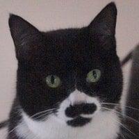 GrouchosMustache