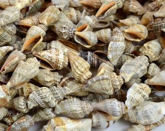 Shell Beads, 36 inch Strand, Natural Shell,  Craft Shells, Beach Shell Lei -B425