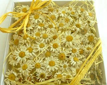 Daisy, Dried Flowers, Wedding Decorations, Small White Flowers, Yellow, Giftbox, Pot Pourri, Sachets, Favors, Crafts, 150 Real Daisies