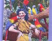 Vintage Carmel Wilson Macaws in Parrot Jungle Miami Florida Linen Postcard