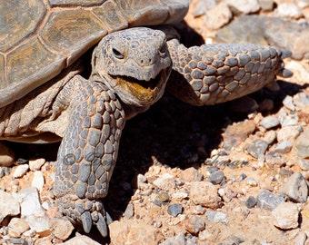 Digital Desktop Wallpaper - Desert Photography - Desert Tortoise - Turtle Photography - Wallpaper JPG
