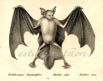 1824 ANTIQUE BAT PRINT original antique halloween lithograph cute and scary nocturnal mammal