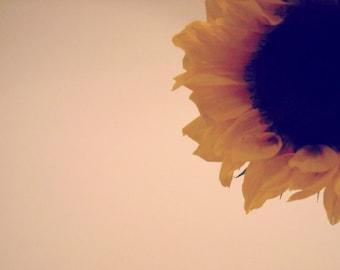 sunflower photo, flower photography, nature, art print, salmon, gold, brown, baby pink, girls room, baby decor, bedroom, teen, wall art