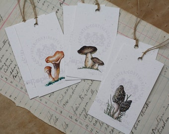 6 Mushroom Gift Tags, Morel Porcini Chanterelle, Nature Tags, Watercolors Set of 6, Fall Autumn, Recycled Papers