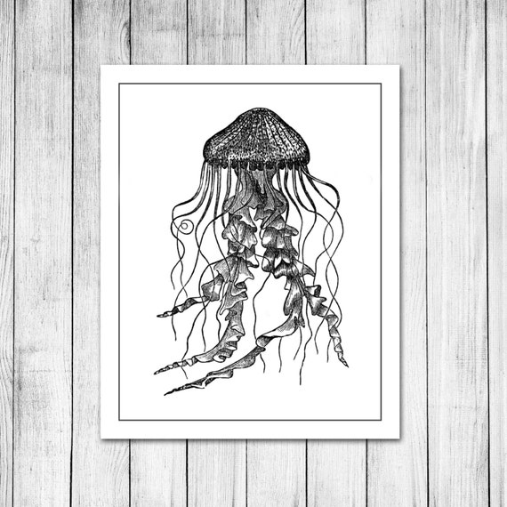 Vintage jellyfish illustration - photo#35