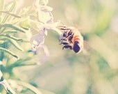 bumblebee photo, spring decor, girls room, garden wall art, nature photography, rosemary photo, botanical print, green, insect art, bee