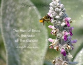 bee photography art nature, garden art, inspirational quotes, famous quotes, lambsear, mauve and grey, flora