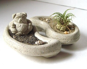 Air Plant . Nano. Yin and Yang . Mini Pug Buddha. Concrete . Bowl . Set