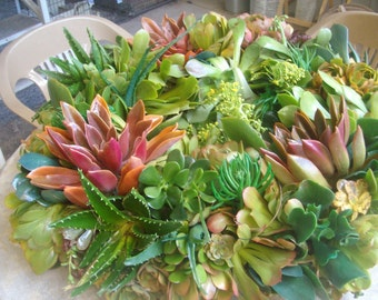 8 inch Living Succulent Wreath (as measured at widest point 'including' the succulents)