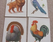 Large Illustrated School Flash Card Poster - Alphabet Letter - Your Choice - Turkey - Lion - Rooster - Blue Bird