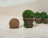 Potted plant in aged pot - Large - dollhouse miniature
