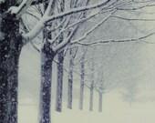 Winter's Walk, 8x10 photo winter landscape, tree photgraphy, snow scene