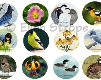 STICKERS, Envelope Seals, Birds, Flowers, Art, Ellen Strope, Repositionable adhesive, gifts, Fun stickers
