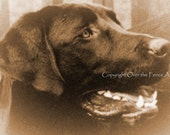 Black Labrador Art Photo Greeting Card Pet Photography Happy Black Labrador Smiles for you vintage photo