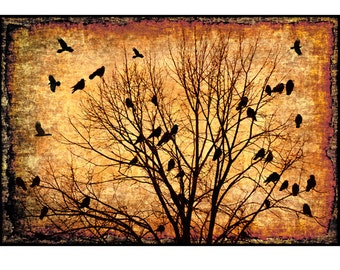 bird photography, nature photography, raven,crow,birds,night sky,flight,sepia,burnt umber, rustic,moody